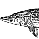 The Patched Pike