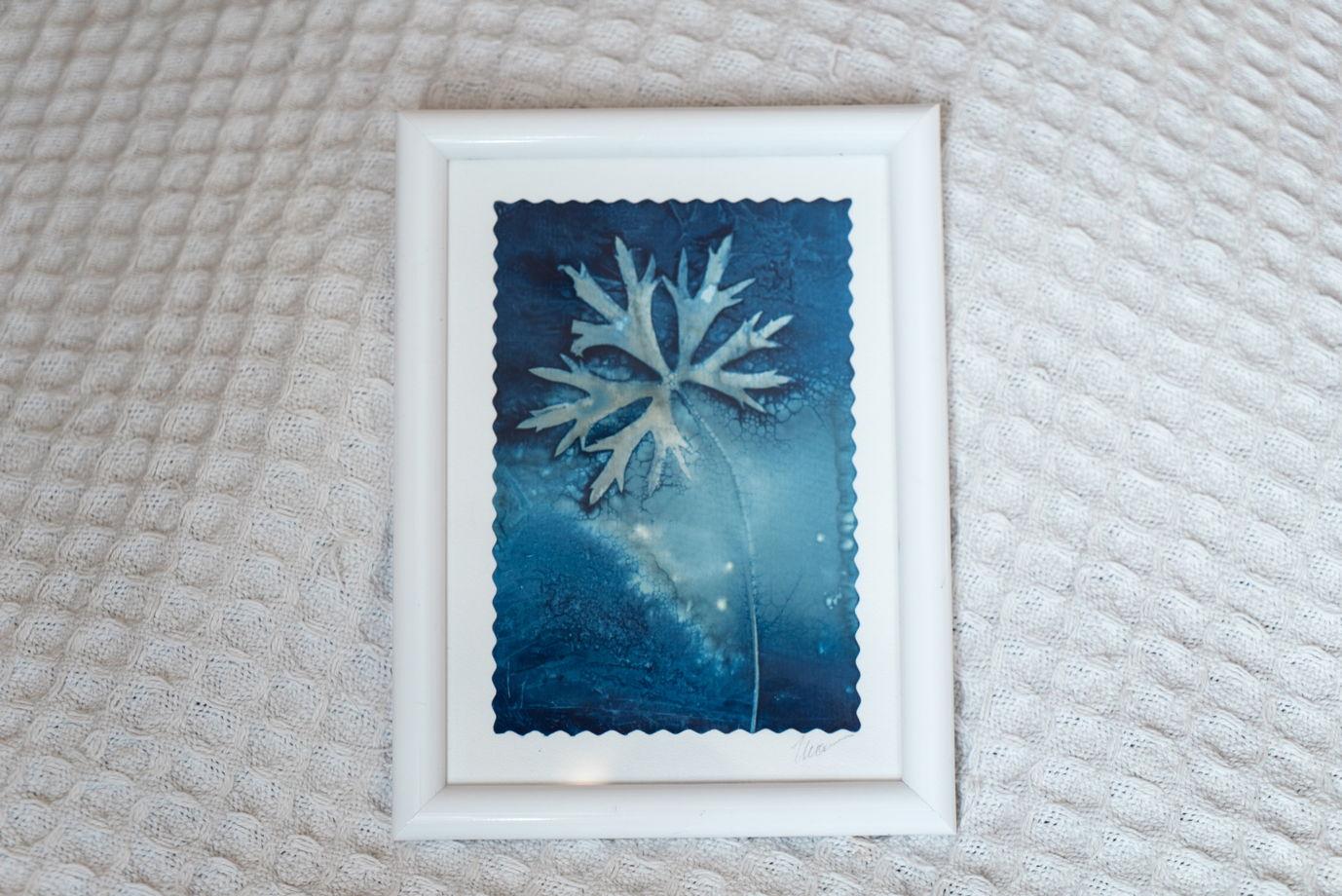 """Фотограмма """"Летняя ночь"""" в технике   wet cyanotype"""