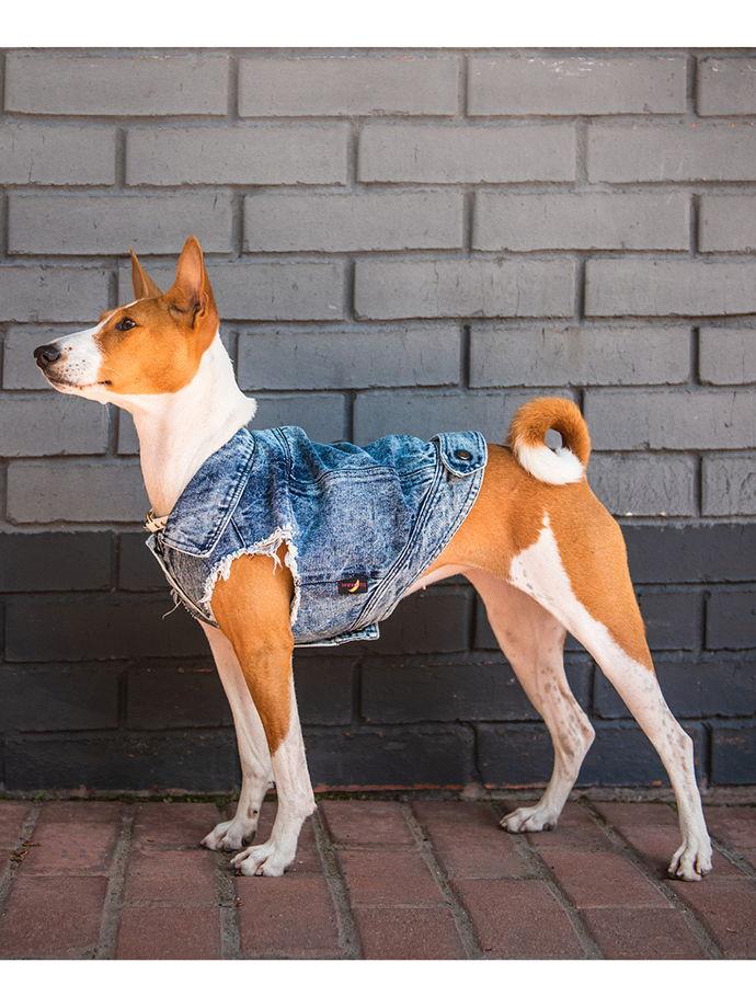 Джинсовка для собаки