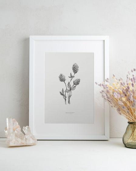 Ботаническая графика: серия Травы
