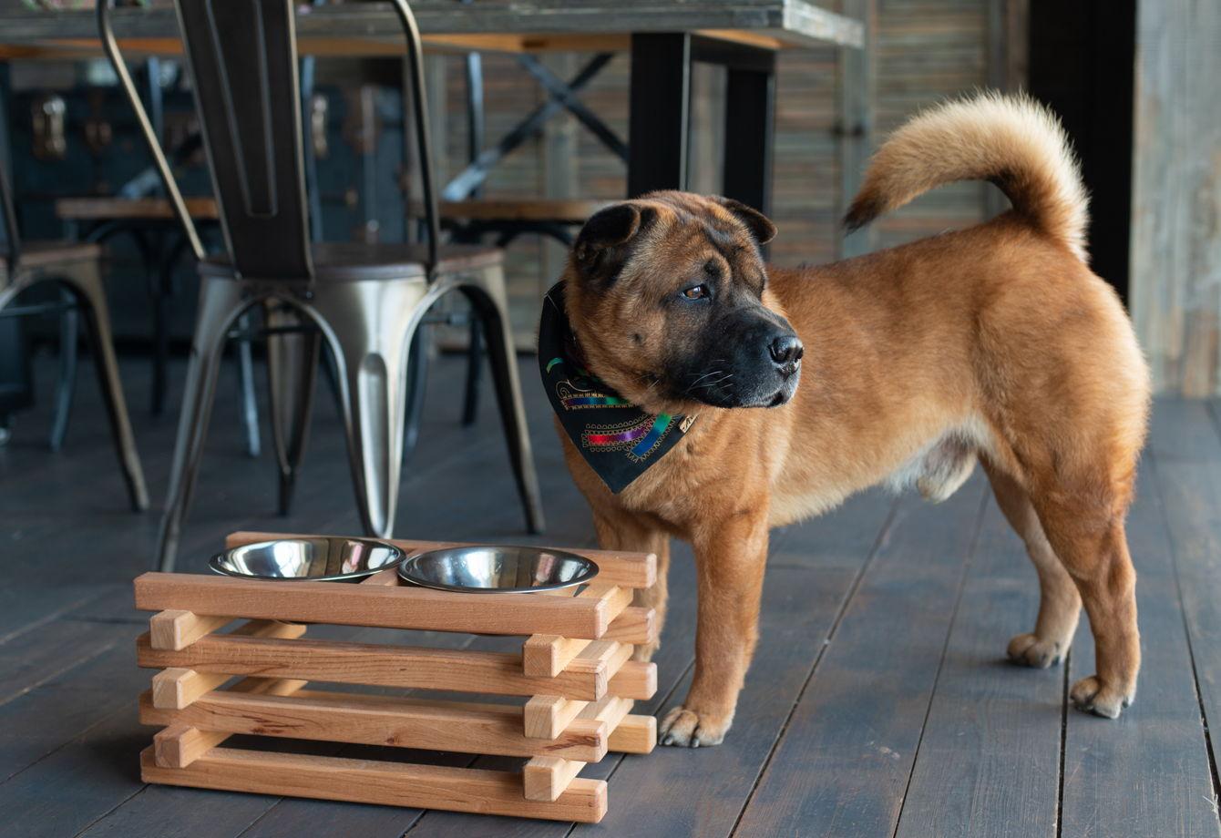 Подставка из бука c мисками Asia Fusion М для средних собак