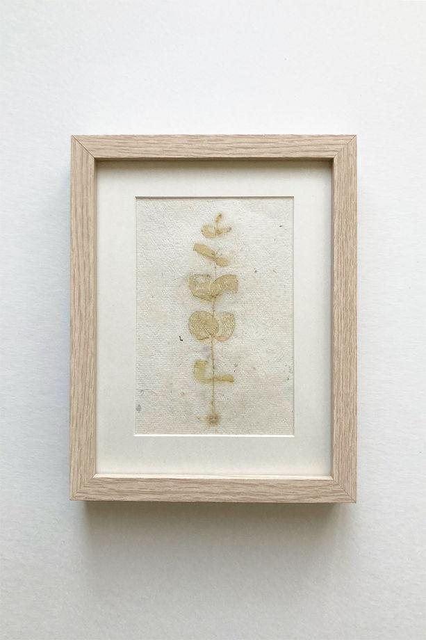 """Картина экопринт """"Eucalýptus 2"""""""
