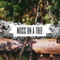 Мох на дереве