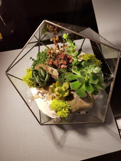 Флорариум с цветным ягелем