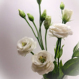 Top-Flower
