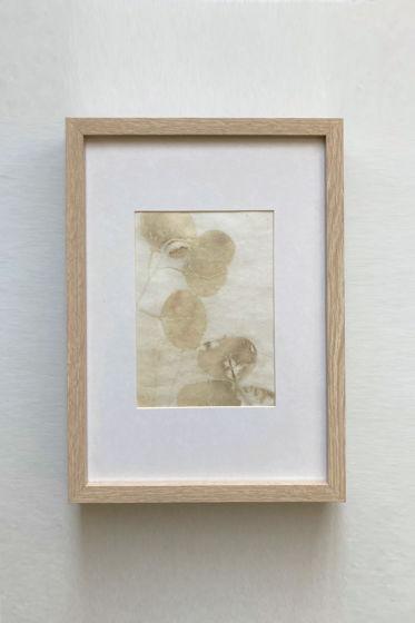 """Картина экопринт """"Myrtaceae"""""""