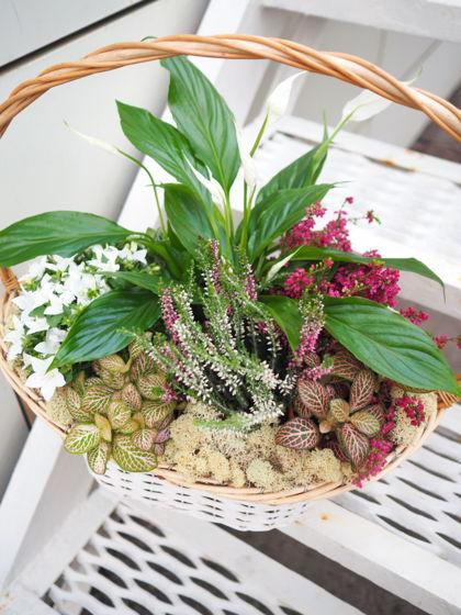 Подарочная корзина с горшечными растениями