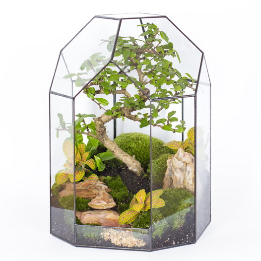 "Флорариум ""Тропический лес"""