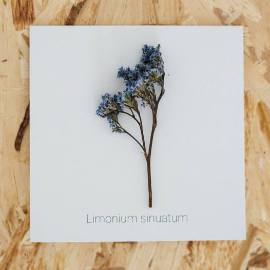 Открытка с Лимониумом (двойная)